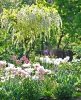 Garten_19
